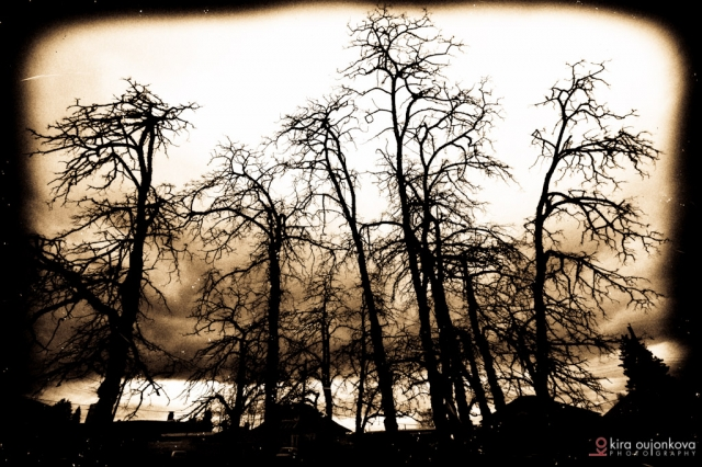 haunted trees
